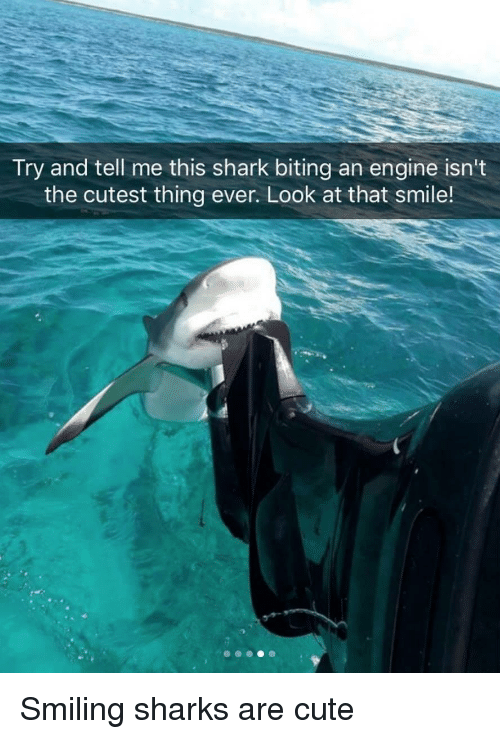 Try and Tell Me This Shark Biting an Engine Isn't the Cutest
