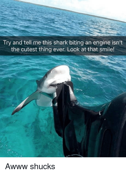 Shark, Smile, and Awww: Try and tell me this shark biting an engine isn't  the cutest thing ever. Look at that smile! Awww shucks