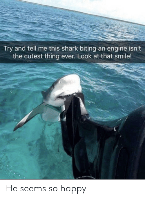 Shark, Happy, and Smile: Try and tell me this shark biting an engine isn't  the cutest thing ever. Look at that smile! He seems so happy