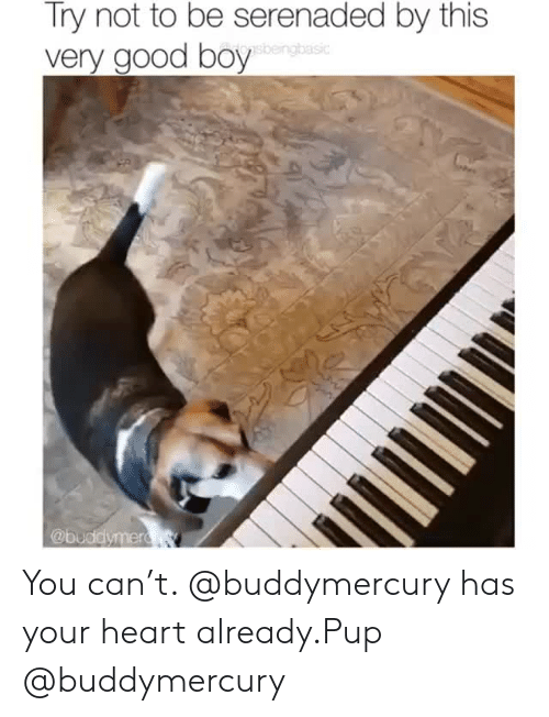 Instagram, Target, and Good: Try not to be serenaded by this  very good boy  sbeingbasic  @buddymer R You can't. @buddymercury has your heart already.Pup @buddymercury