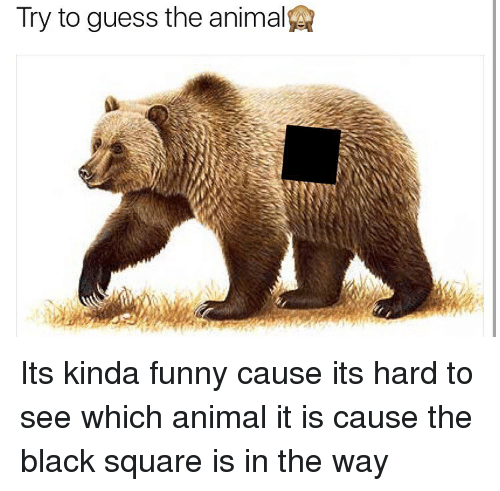 Try to Guess the Animal Its Kinda Funny Cause Its Hard to