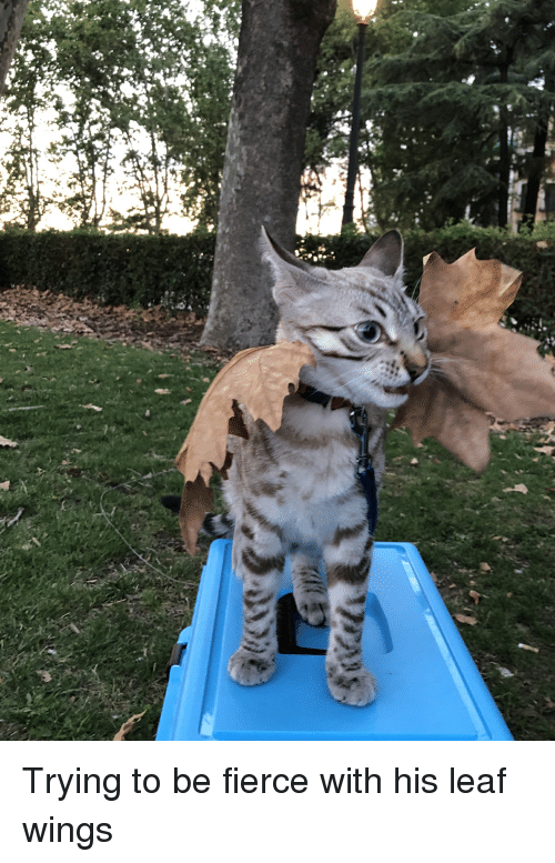 Trying to Be Fierce With His Leaf Wings | Wings Meme on SIZZLE