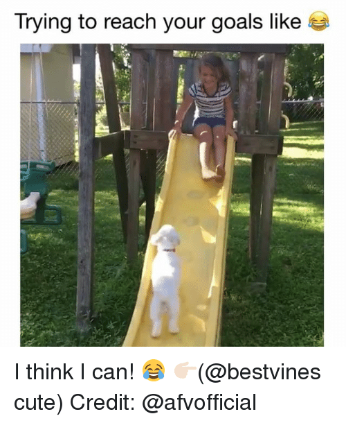 Cute, Goals, and Memes: Trying to reach your goals like I think I can! 😂 👉🏻(@bestvines cute) Credit: @afvofficial
