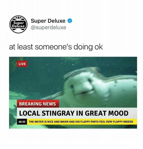 Funny, Mood, and News: TT Super Deluxe  Xe @superdeluxe  Super  Deluxe  at least someone's doing ok  LIVE  BREAKING NEWS  LOCAL STINGRAY IN GREAT MOOD  18:30  THE WATER IS NICE AND WARM AND HIS FLAPPY PARTS FEEL VERY FLAPPY INDEED
