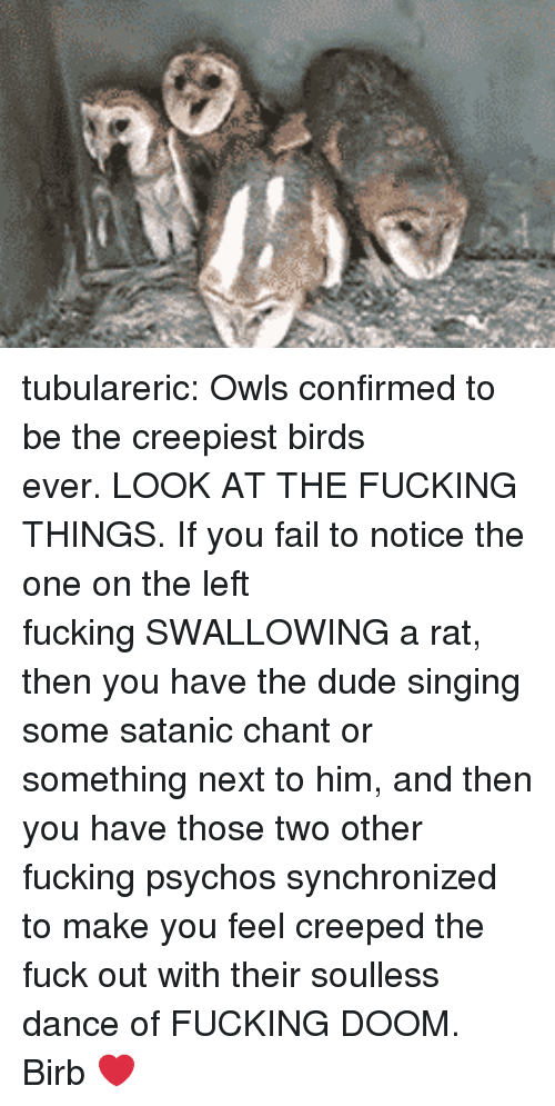 Dude, Fail, and Fucking: tubulareric:  Owls confirmed to be the creepiest birds ever.LOOK AT THE FUCKING THINGS.If you fail to notice the one on the left fuckingSWALLOWINGa rat, then you have the dude singing some satanic chant or something next to him, and then you have those two other fucking psychos synchronized to make you feel creeped the fuck out with their soulless dance ofFUCKING DOOM.  Birb ❤️