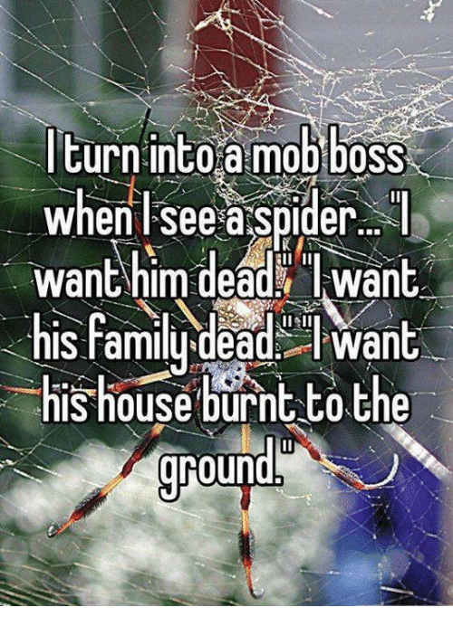 Turn Into a Mob Boss When See a Spider Want Him Dead Want ...
