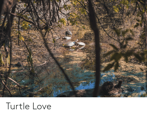 Love, Turtle, and Turtle Love: Turtle Love