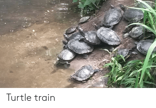 Train and Turtle: Turtle train