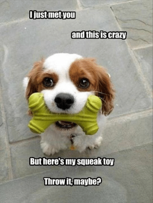 Crazy, Memes, and 🤖: Tust metyou  and this is crazy  But here's my squeak toy  Throw it,maybe?