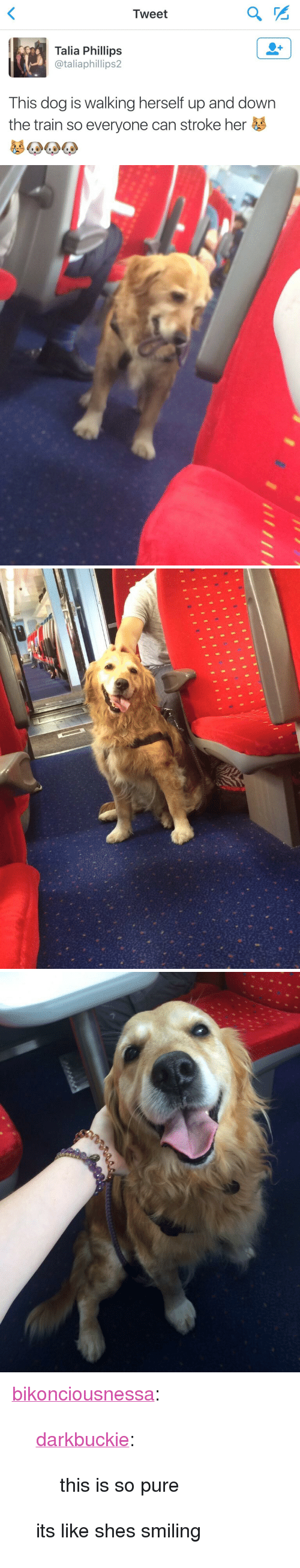 "Tumblr, Blog, and Http: Tweet  2  Talia Phillips  @taliaphillips2  This dog is walking herself up and down  the train so everyone can stroke her <p><a href=""http://bikonciousnessa.tumblr.com/post/149385251520/darkbuckie-this-is-so-pure-its-like-shes"" class=""tumblr_blog"">bikonciousnessa</a>:</p>  <blockquote><p><a class=""tumblr_blog"" href=""http://darkbuckie.tumblr.com/post/147946761711"">darkbuckie</a>:</p> <blockquote> <p>this is so pure</p> </blockquote>  <p>its like shes smiling</p></blockquote>"