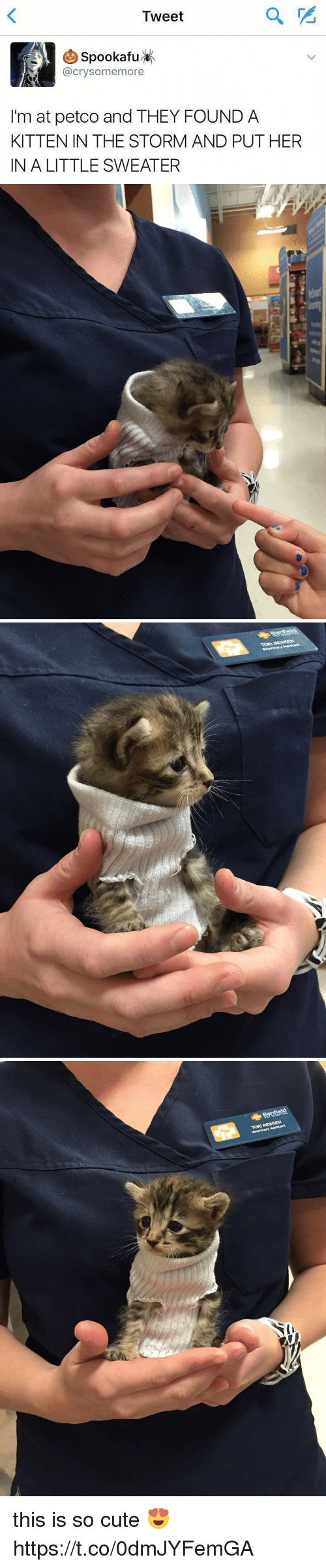 Cute, Petco, and Girl Memes: Tweet  (A) SpookafuK  @crysomemore  I'm at petco and THEY FOUND A  KITTEN IN THE STORM AND PUT HER  IN A LITTLE SWEATER   TORI MEINSEN  Veterinary Assistant this is so cute 😍 https://t.co/0dmJYFemGA