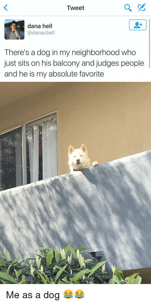 Funny, Tweet, and  Tweeting: Tweet  dana hell  u danacbell  There's a dog in my neighborhood who  just sits on his balcony and judges people  and he is my absolute favorite Me as a dog 😂😂