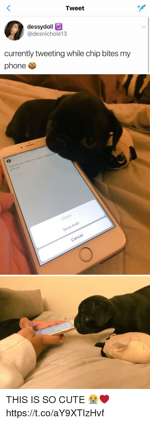 Cute, Phone, and Girl Memes: Tweet  dessydoll  @desnichole13  currently tweeting while chip bites my  phone   ihsle y balby bites m  Delete  Save draft  Cancel THIS IS SO CUTE 😭❤️ https://t.co/aY9XTlzHvf