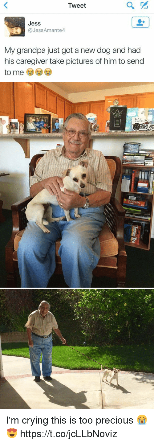 Crying, Precious, and Grandpa: Tweet  Jess  @JessAmante4  My grandpa just got a new dog and had  his caregiver take pictures of him to send  to me I'm crying this is too precious 😭😍 https://t.co/jcLLbNoviz