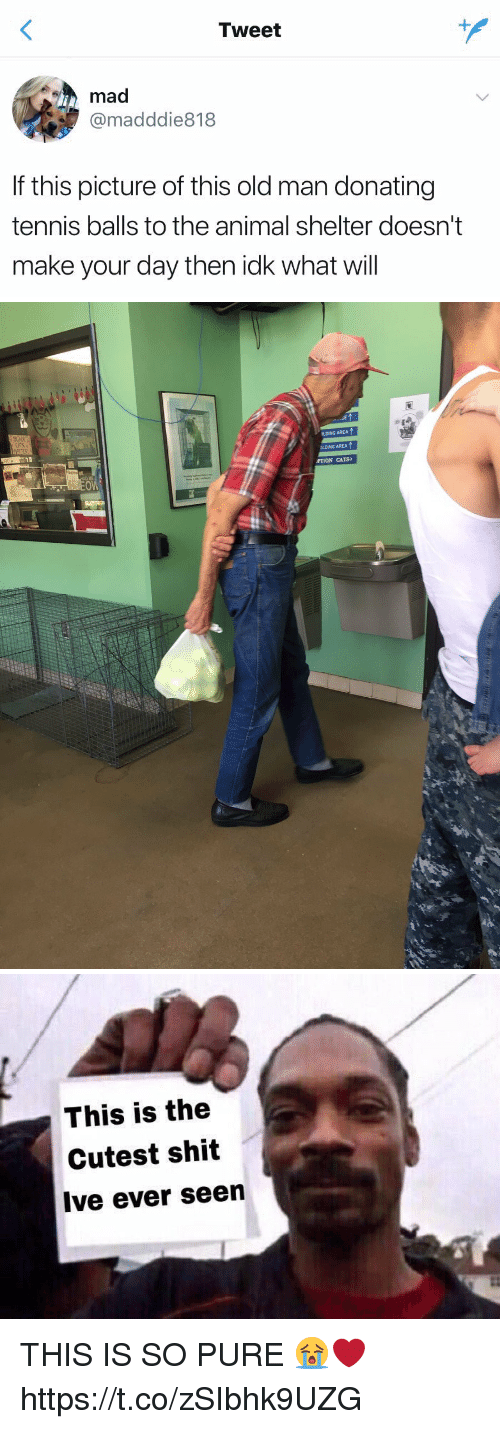 Cats, Old Man, and Shit: Tweet  mad  @madddie818  If this picture of this old man donating  tennis balls to the animal shelter doesn't  make your day then idk what will   LING AREA ↑  DLDING AREA  PTION CATS   This is the  Cutest shit  Ive ever seen THIS IS SO PURE 😭❤️ https://t.co/zSIbhk9UZG