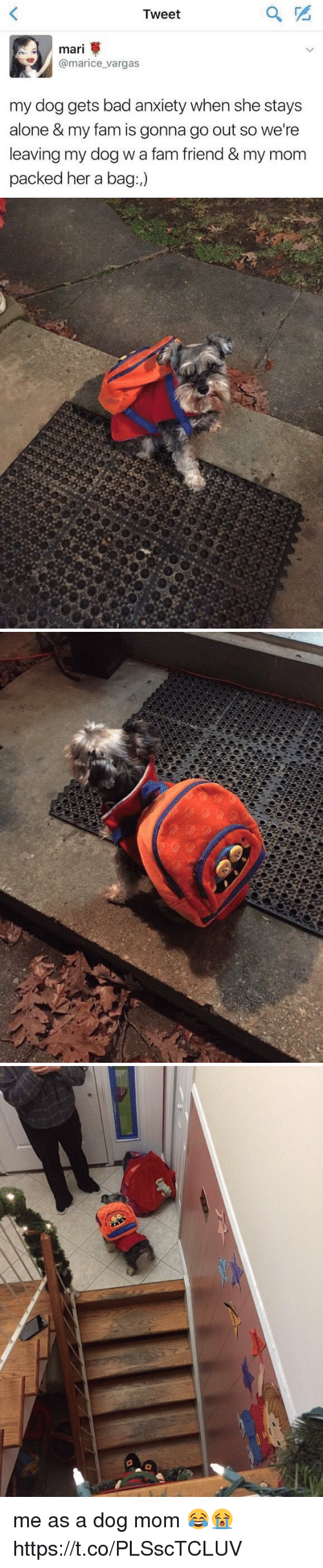 Being Alone, Bad, and Fam: Tweet  mari  marice vargas  my dog gets bad anxiety when she stays  alone & my fam is gonna go out so we're  leaving my dog wafam friend & my mom  packed her a bag   をや me as a dog mom 😂😭 https://t.co/PLSscTCLUV