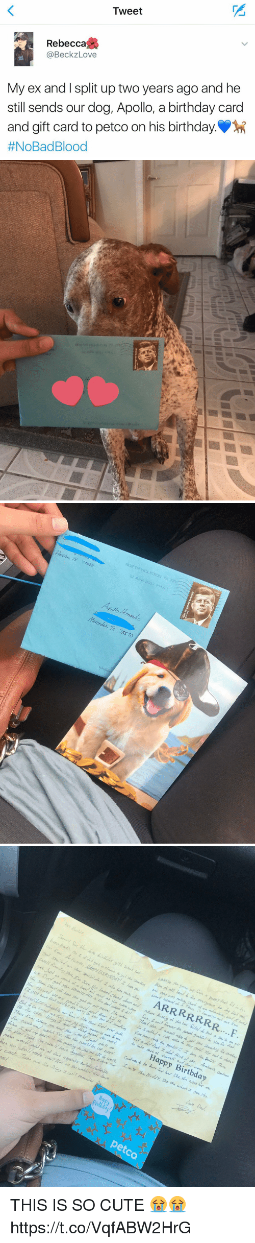 Birthday, Bloods, and Cute: Tweet  TI  Rebecca  @BeckzLove  My ex and I split up two years ago and he  still sends our dog, Apollo, a birthday card  and gift card to petco on his birthday..  #NoBad Blood   Hoston, TX  71043  Mercedes, 78570  pli   Happy Birthday  45  idar  petco THIS IS SO CUTE 😭😭 https://t.co/VqfABW2HrG