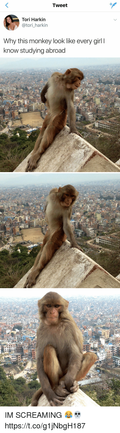Girl, Monkey, and Girl Memes: Tweet  Tori Harkin  @tori_harkin  Why this monkey look like every girl I  know studying abroad IM SCREAMING 😂💀 https://t.co/g1jNbgH187