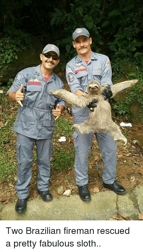 Dank, Sloth, and Brazilian: Two Brazilian fireman rescued a pretty fabulous sloth..