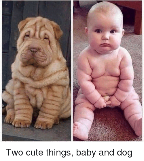 Crazy, Cute, and Omg: Two cute things, baby and dog