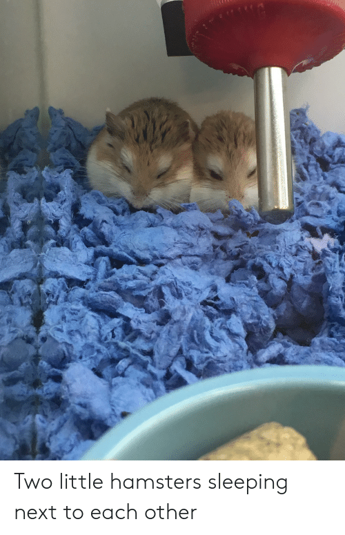 Two Little Hamsters Sleeping Next to Each Other | Sleeping