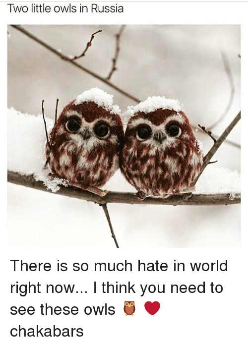 Memes, In World, and 🤖: Two little owls in Russia There is so much hate in world right now... I think you need to see these owls 🦉 ❤ chakabars