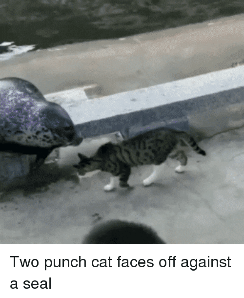 Seal, Cat, and  Punch: Two punch cat faces off against a seal