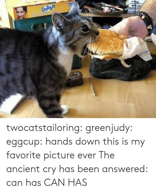 Tumblr, Blog, and Http: twocatstailoring:  greenjudy: eggcup: hands down this is my favorite picture ever The ancient cry has been answered: can has  CAN HAS