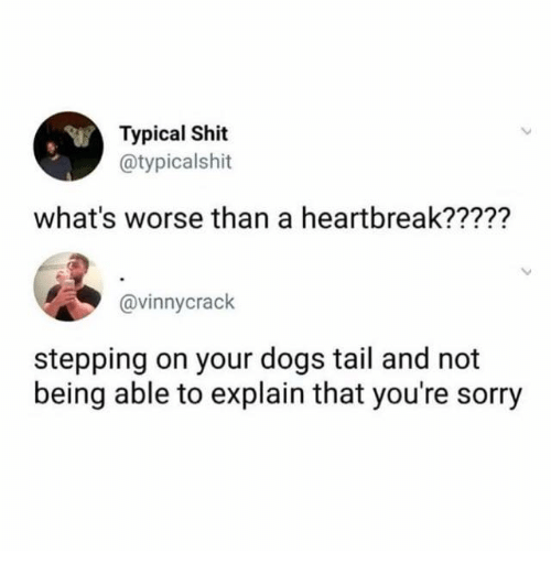 Dogs, Shit, and Sorry: Typical Shit  @typicalshit  Sr  what's worse than a heartbreak?????  @vinnycrack  stepping on your dogs tail and not  being able to explain that you're sorry