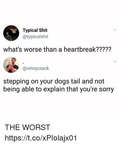 Dogs, Funny, and Shit: Typical Shit  @typicalshit  what's worse than a heartbreak?????  @vinnycrack  stepping on your dogs tail and not  being able to explain that you're sorry THE WORST https://t.co/xPIolajx01