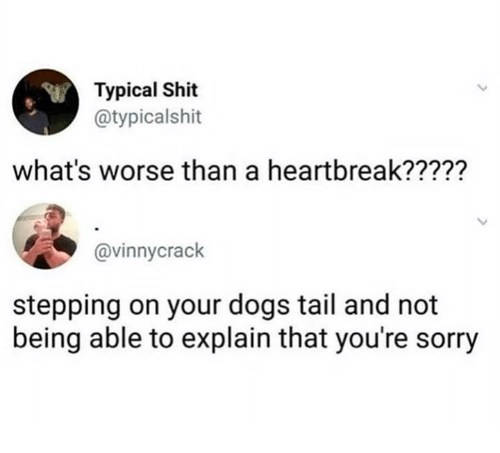 Dank, Dogs, and Shit: Typical Shit  @typicalshit  what's worse than a heartbreak?????  @vinnycrack  stepping on your dogs tail and not  being able to explain that you're sorry