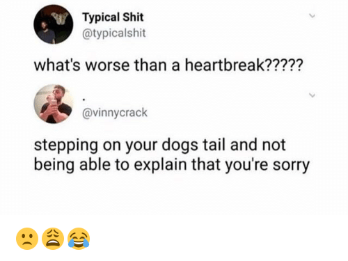Dogs, Shit, and Sorry: Typical Shit  @typicalshit  what's worse than a heartbreak?????  @vinnycrack  stepping on your dogs tail and not  being able to explain that you're sorry 🙁😩😂