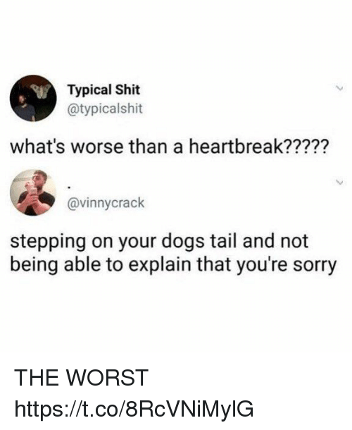 Dogs, Funny, and Shit: Typical Shit  @typicalshit  what's worse than a heartbreak?????  @vinnycrack  stepping on your dogs tail and not  being able to explain that you're sorry THE WORST https://t.co/8RcVNiMylG