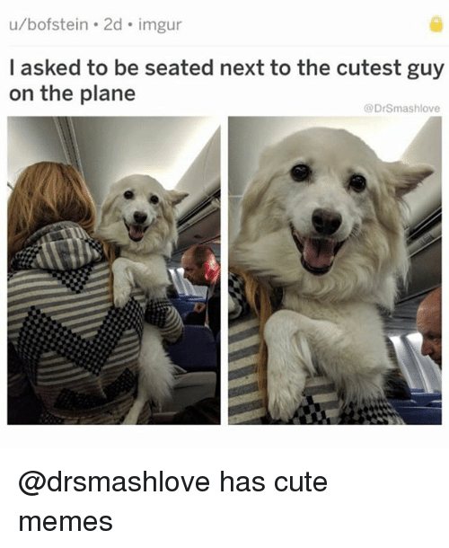 Cute, Funny, and Memes: u/bofstein . 2d imgur  l asked to be seated next to the cutest guy  on the plane  @DrSmashlove @drsmashlove has cute memes