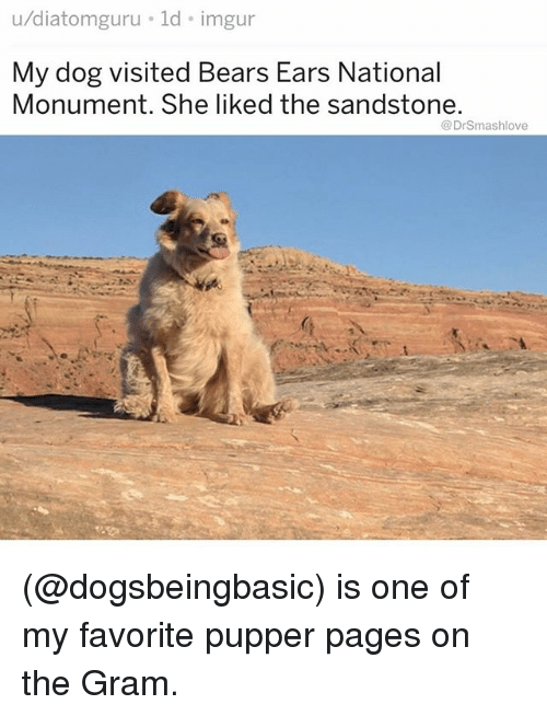 Memes, Bears, and Imgur: u/diatomguru ld imgur  My dog visited Bears Ears Nation  Monument. She liked the sandstone.  al  @DrSmashlove (@dogsbeingbasic) is one of my favorite pupper pages on the Gram.