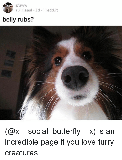 Love, Memes, and Butterfly: u/Hjaaal ld i.redd.it  belly rubs? (@x__social_butterfly__x) is an incredible page if you love furry creatures.