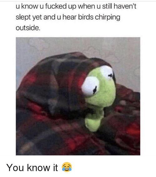 Memes, Birds, and 🤖: u know u fucked up when u still haven't  slept yet and u hear birds chirping  outside. You know it 😂