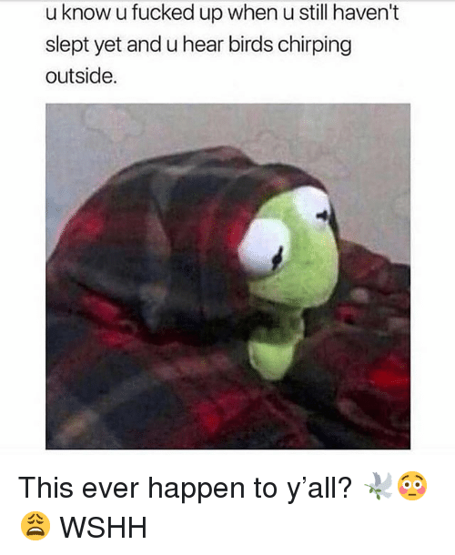 Memes, Wshh, and Birds: u know u fucked up when u still haven't  slept yet and u hear birds chirping  outside. This ever happen to y'all? 🕊😳😩 WSHH