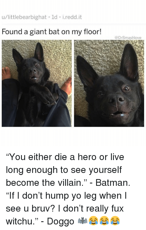 """Batman, Memes, and Yo: u/littlebearbighat ld i.redd.it  Found a giant bat on my floor!  @DrSmashlove """"You either die a hero or live long enough to see yourself become the villain."""" - Batman. """"If I don't hump yo leg when I see u bruv? I don't really fux witchu."""" - Doggo 🦇😂😂😂"""