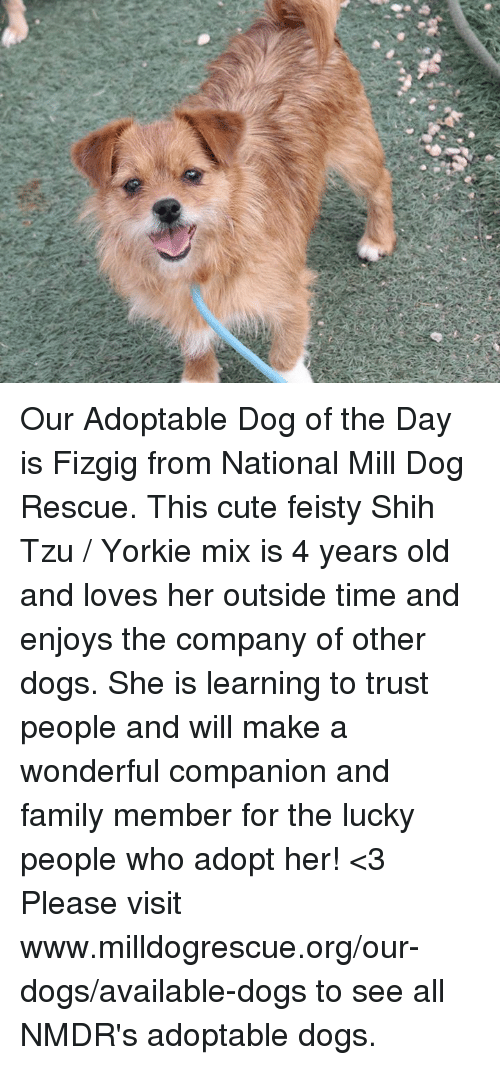 U Our Adoptable Dog Of The Day Is Fizgig From National Mill Dog