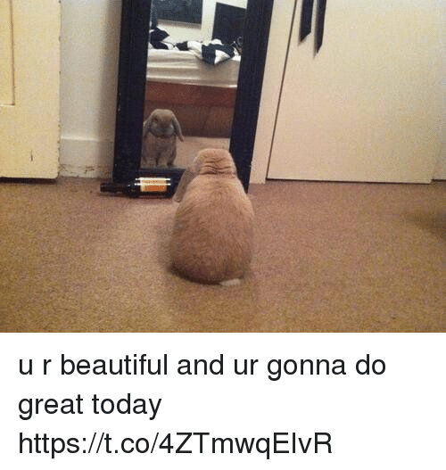 Beautiful, Today, and Girl Memes: u r beautiful and ur gonna do great today https://t.co/4ZTmwqEIvR