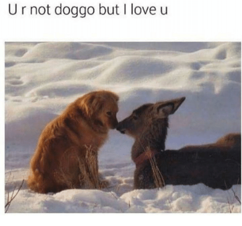 Love, Doggo, and I Love U: U r not doggo but I love u