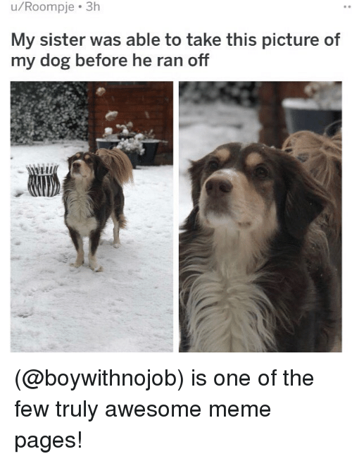 Meme, Memes, and Awesome: u/Roompje. 3h  My sister was able to take this picture of  my dog before he ran off (@boywithnojob) is one of the few truly awesome meme pages!