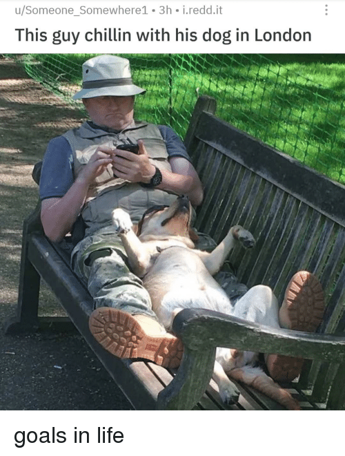 Goals, Life, and London: u/Someone_Somewhere1 3h i.redd.it  This guy chillin with his dog in London goals in life