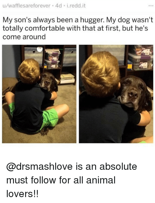 Comfortable, Memes, and Animal: u/wafflesareforever 4d i.redd.it  My son's always been a hugger. My dog wasn't  totally comfortable with that at first, but he's  come around @drsmashlove is an absolute must follow for all animal lovers!!