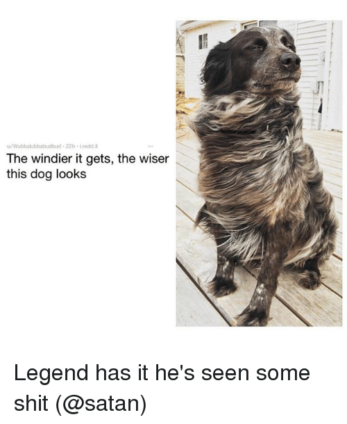 Funny, Shit, and Satan: u/Wubbalubbabudbud 22h Lredd.it  The windier it gets, the wiser  this dog looks Legend has it he's seen some shit (@satan)