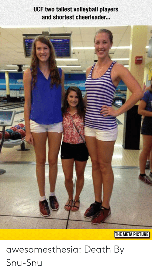 Tumblr, Blog, and Death: UCF two tallest volleyball players  and shortest cheerleade...  THE META PICTURE awesomesthesia:  Death By Snu-Snu
