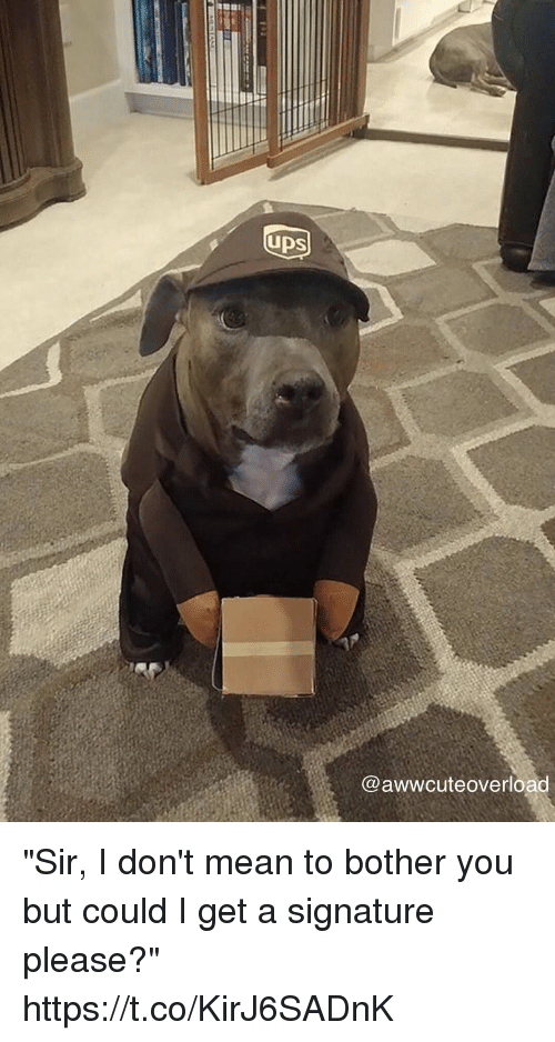 """Mean, Girl Memes, and You: UDS  @awwcuteoverload """"Sir, I don't mean to bother you but could I get a signature please?"""" https://t.co/KirJ6SADnK"""