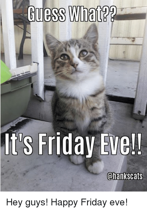 Friday, It's Friday, and Memes: uess What?  It's Friday Eve!!  Chankscats Hey guys!  Happy Friday eve!