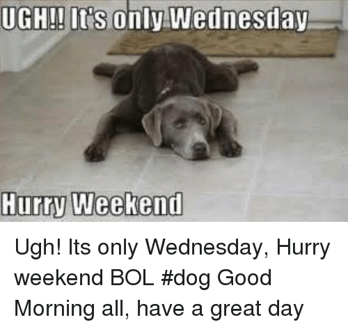 Good Morning Meme Dog : Ugh in s only wednesday hurry weekend its